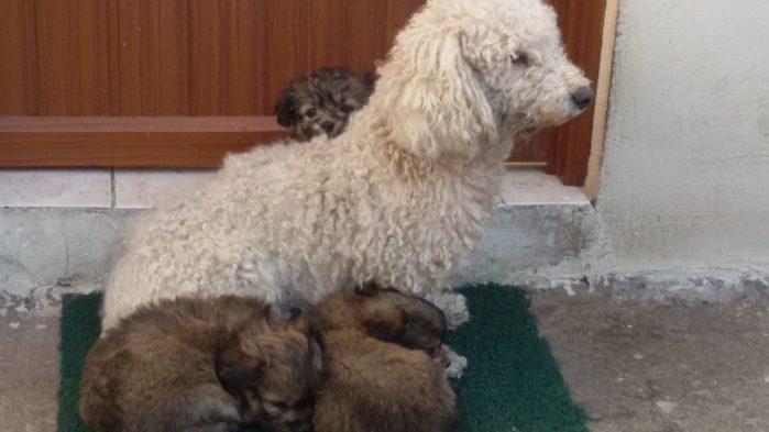 Niedliche Gesellen: Die Hunde der Familie Iza Biallos